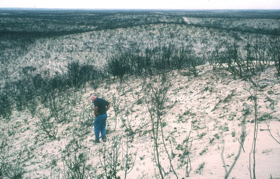 AJC inspects the damage after a fire swept Heath Skink habitat in the Big Desert, 2002