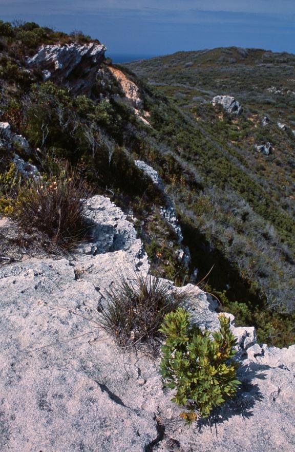 Limestone bluffs of south-western Western Australia