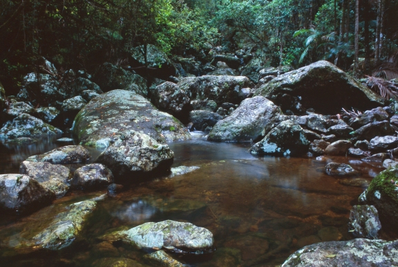 Sub-tropical rainforest of the Nightcap Range, NSW