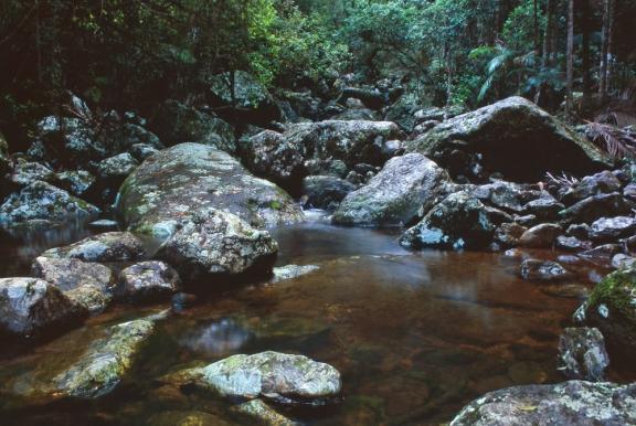 Sub-tropical rainforest of the Nightcap Range, NSW