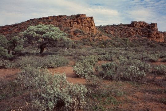Blue bush, Myall and Whyalla sandstone, South Australia